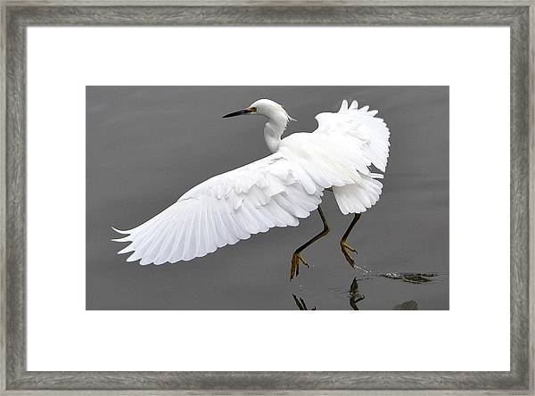 Tiptoe Framed Print