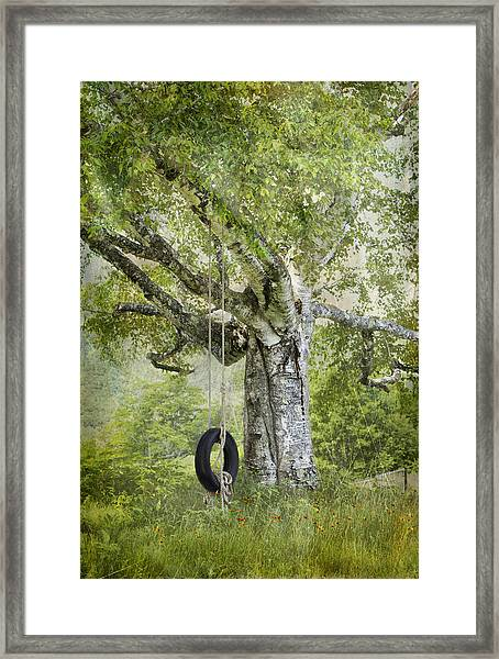 Tire Swing Hanging Off A White Birch Framed Print