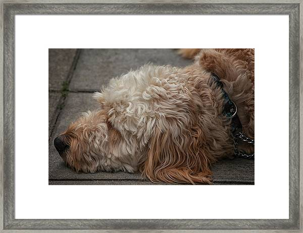 Tired Framed Print
