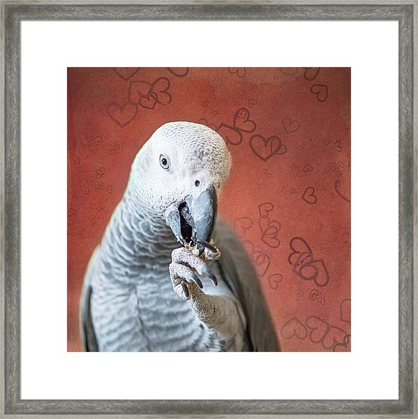 To Be Owned By A Grey Is To Know Love Framed Print
