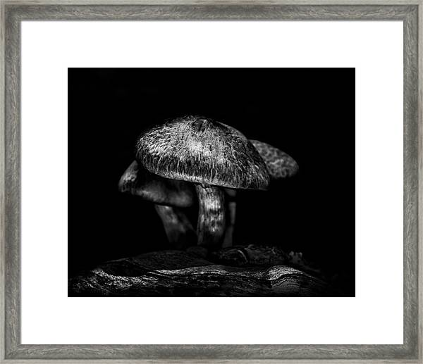 Toadstools On A Toronto Trail 1 Framed Print