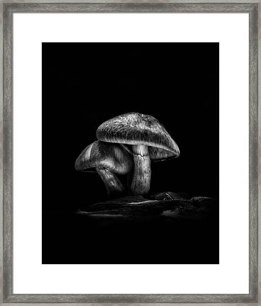 Toadstools On A Toronto Trail No 2 Framed Print