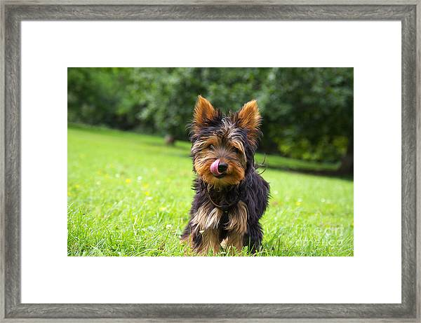 Toby In The Startup ...  Framed Print