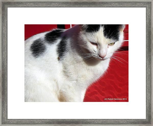 Tom Barn Cat  Framed Print