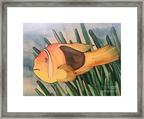 Tomato Clown Fish Framed Print