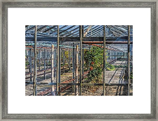 Tomatoes And Pumpkins Framed Print