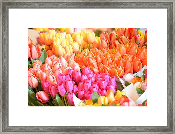 Tons Of Tulips Framed Print