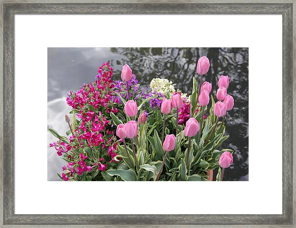 Top View Planter Framed Print