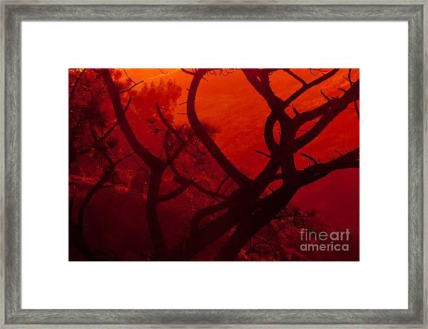 Torrey Pines Glow Framed Print