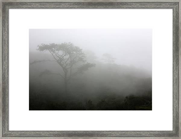 Torrey Pines With Coastal Fog Framed Print by Robin Street-Morris