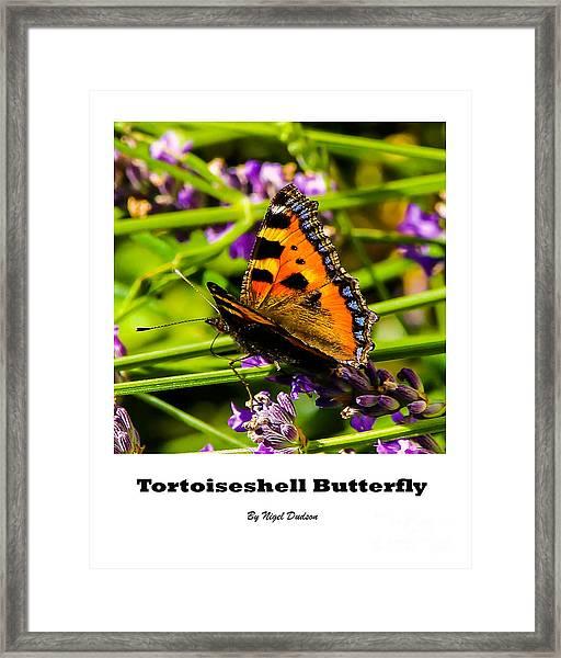 Tortoiseshell Butterfly. Framed Print
