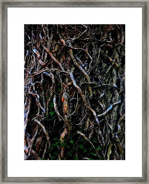 Totally Twisted In Yellow Springs Framed Print