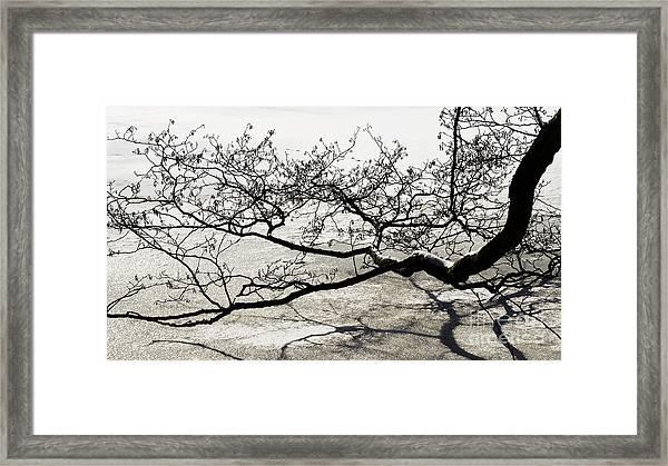 Wonderful Tree Framed Print