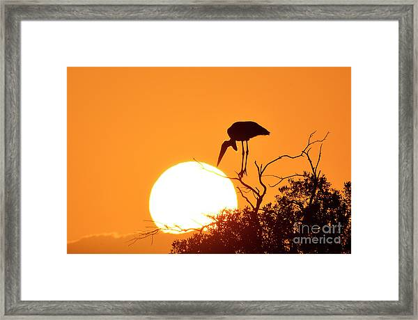Touching The Sun Framed Print