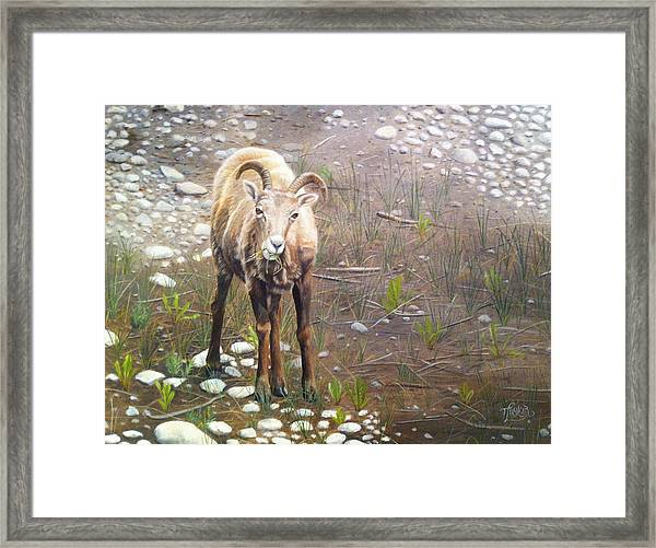 Tourist Attraction Framed Print