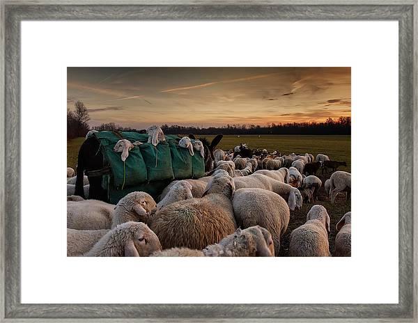 Toward New Grasslands Framed Print