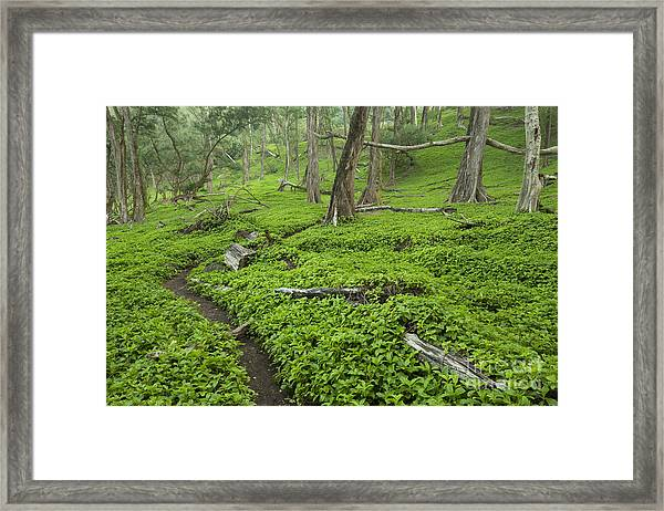 Trail Through Pololu Valley Framed Print