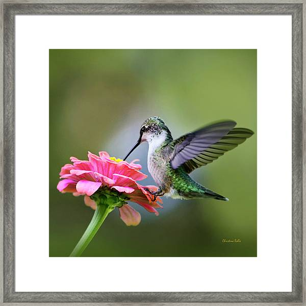 Tranquil Joy Hummingbird Square Framed Print