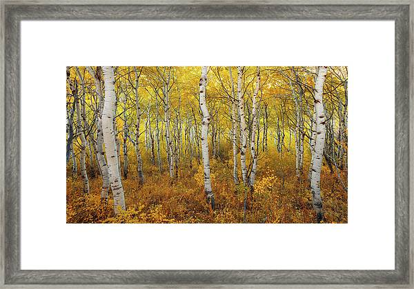 Framed Print featuring the photograph Transition by Dustin  LeFevre