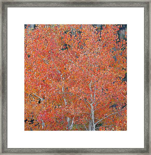 Translucent Aspen Orange Framed Print