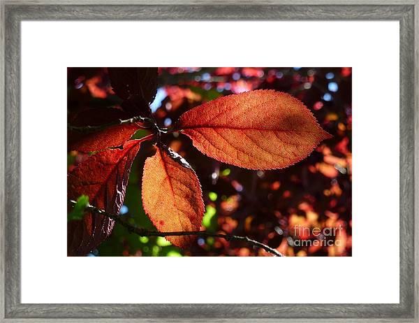 Transparence 17 Framed Print