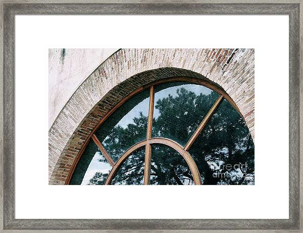 Trapped Tree Framed Print