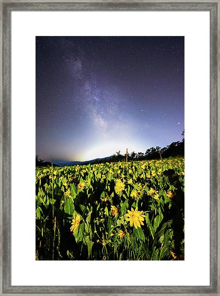 Trapper's Loop Wildflowers Framed Print