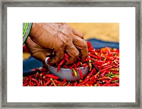 Woman Holding Red Chillies, Can Cau Market, Sapa,vietnam Framed Print