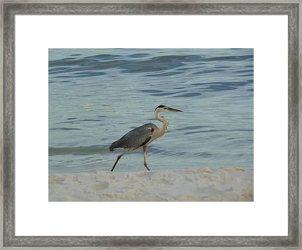 Ocean Wanderer Framed Print
