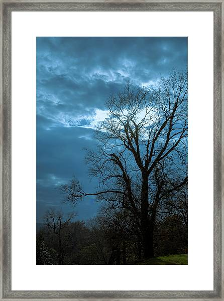 Tree # 23 Framed Print