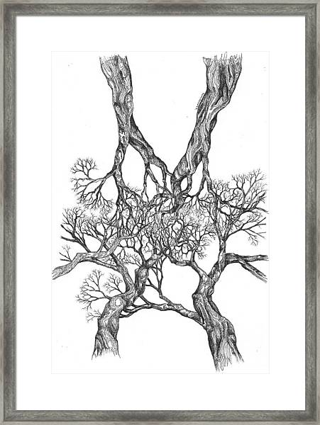 Tree 12 Framed Print