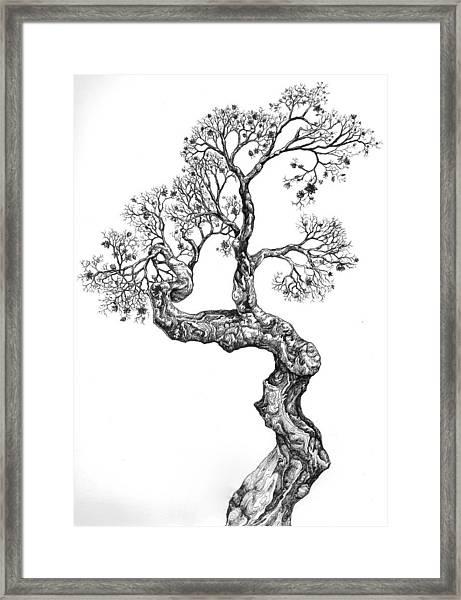 Tree 14 Framed Print