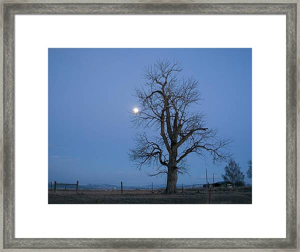 Tree And Moon Framed Print