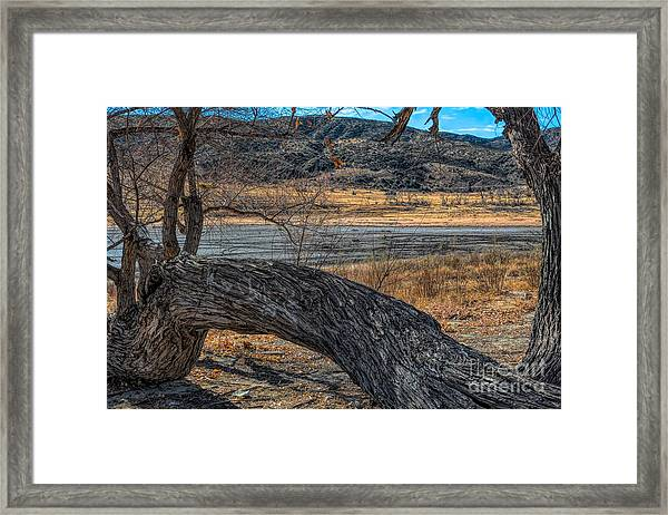 Tree At Elizabeth Lake Framed Print