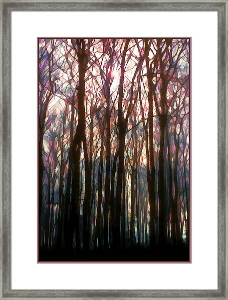 Tree Branch Cathedral Framed Print