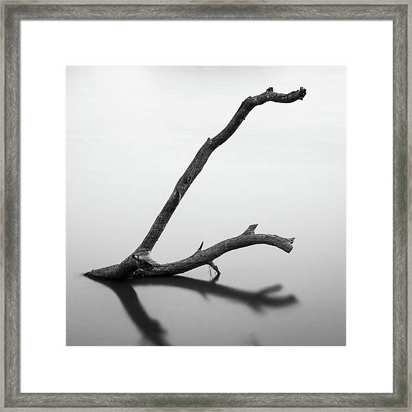 Tree Branch On The Water Framed Print
