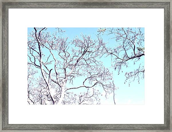 Tree Branches Reaching For Heaven 2 Framed Print