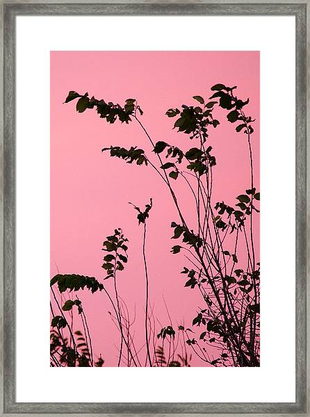 Tree Branches Under Pink Sky Framed Print