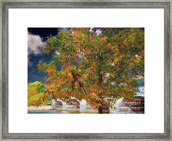 Tree By The Bridge Framed Print