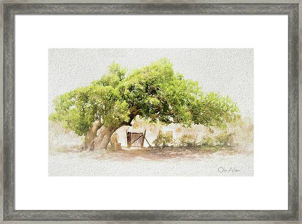 Tree By The Gate Framed Print