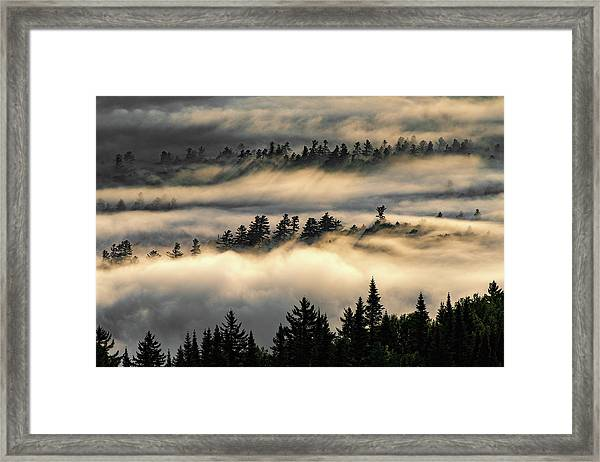 Trees In The Clouds Framed Print