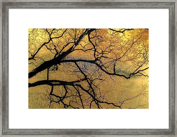 Tree Fantasy 7 Framed Print