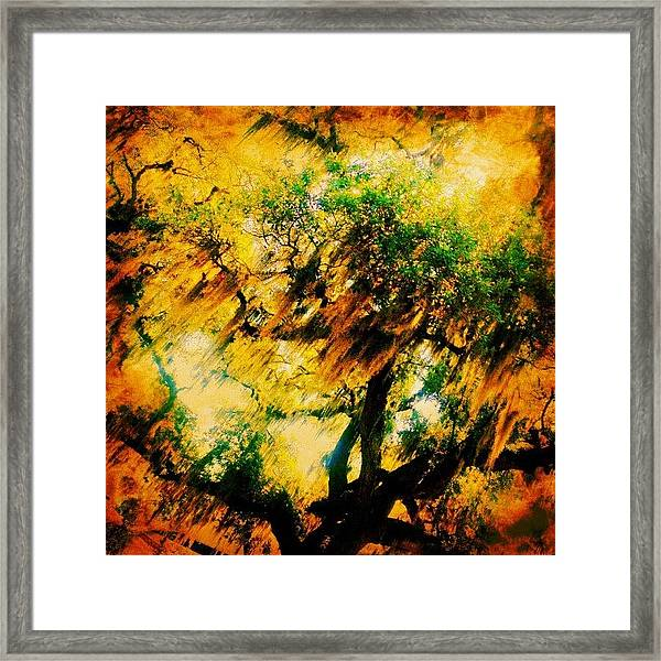 #tree #green #yellow #colourful #sc Framed Print