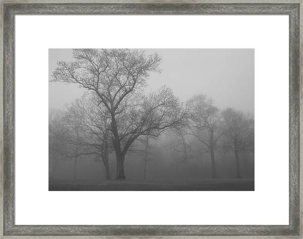 Tree In Black And White Framed Print by James Jones