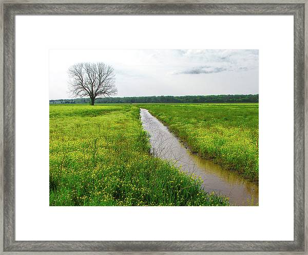Tree In Field 2 Framed Print