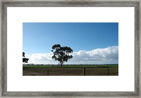 Tree In Field Framed Print