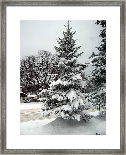 Tree In Snow Framed Print