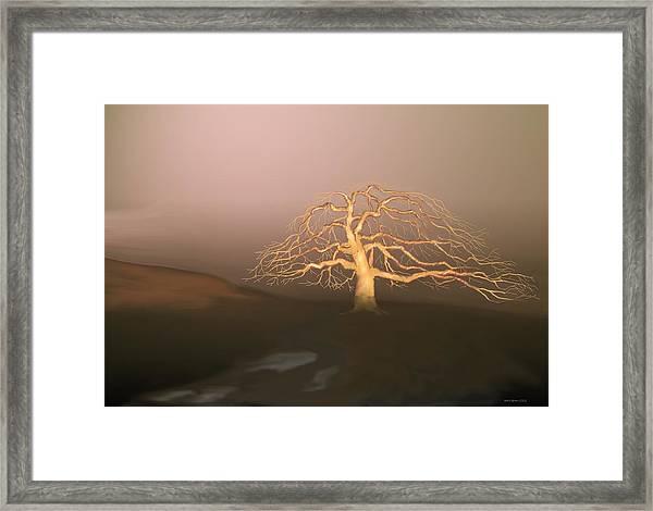 Tree In Winter I Framed Print