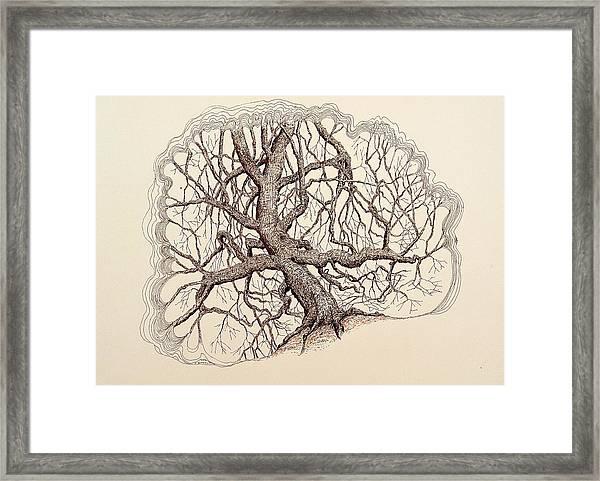 Tree In Winter II Framed Print