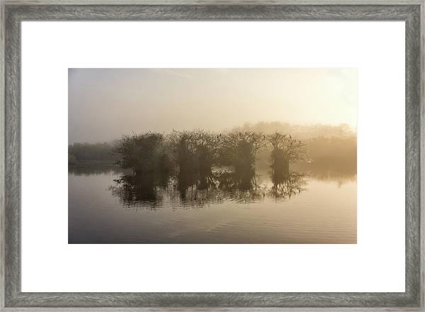 Tree Islands Framed Print